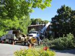 Calgary Tree Removal Business 299,000, red-deer